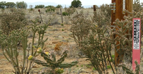Nice cacti. Junipers in the distance.  High desert vegetation at 5000.'