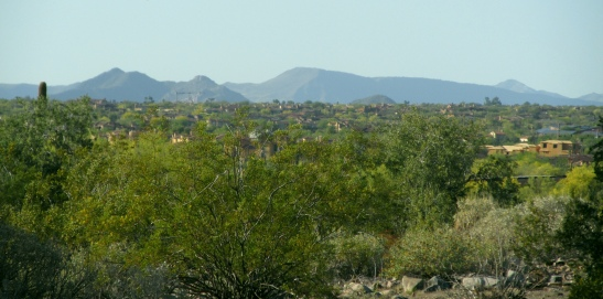 From McDowell Mountain Ranch HOA, this is a view of the very green DC Ranch HOA. In the distance (NNW) you can see Black Mountain in the Townes of Carefree / Cave Creek, and the mountains north of Cave Creek, part of the Tonto National Forest.