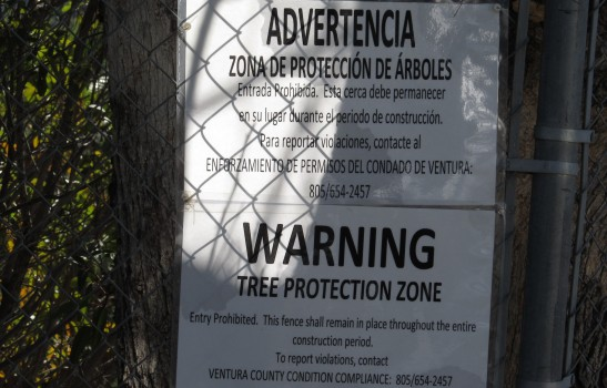 toaks_ventura_tree_protection